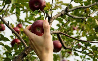 La Bibbia parla del frutto proibito